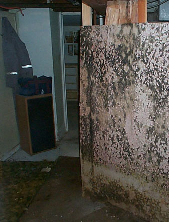 Mold On Basement Wall
